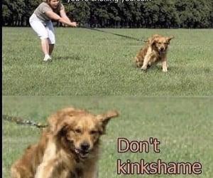 dog, choke, and shame image