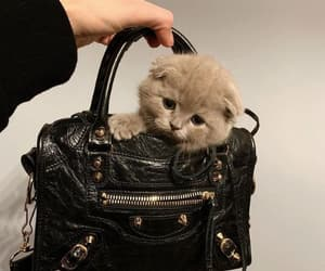 bag and kittie image