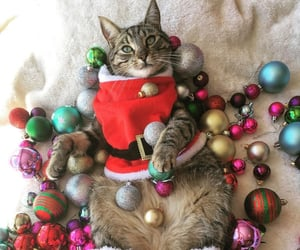 advent, cat, and animal image