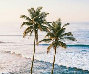 palm tree ocean image