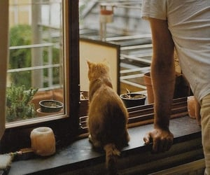 cat, boy, and window image
