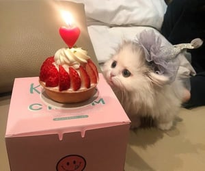 cat, kitty, and cake image