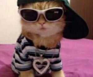 swaggy kitty </3