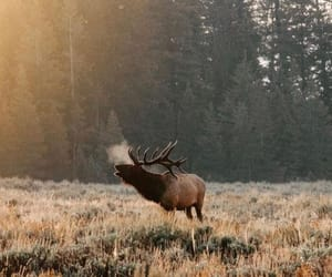deer, mist, and roar image