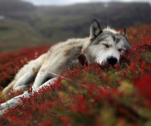 asleep in a field of flowers