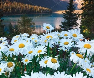 Blooming Flowers in Emerald Lodge Photos Emerald Lake is a popular lake in Yoho national park in Banff.  by Always Wanderlust | Pinterest