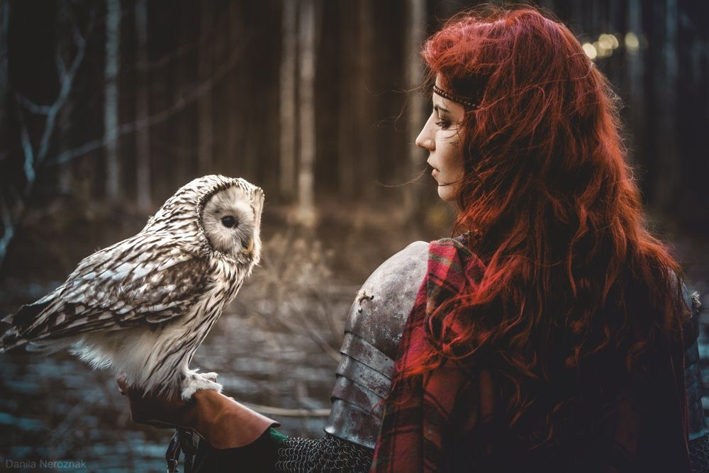 owl, forest, and nature image