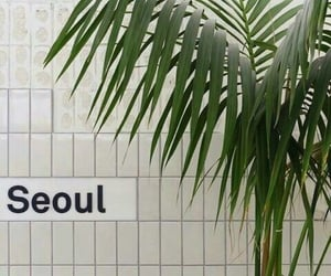 plants, aesthetic, and seoul image