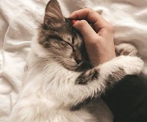 animal, cool, and sleep image