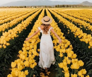 flowers, yellow, and photography image