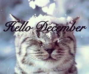 animal, december, and cat image