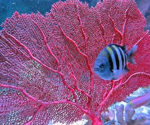 Venus Sea Fan by 5of7 on Flickr. - Chronicles of a Love Affair with Nature
