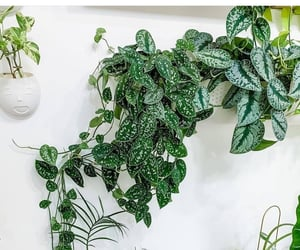 indoor plants, home, and plants image