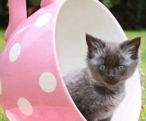 Cute Cat 🐈 🐈@_Naina