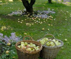 apple, cottagecore, and fruit image