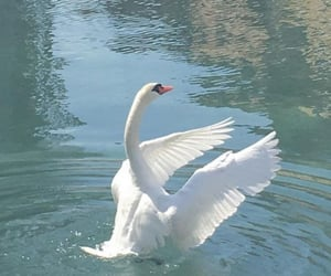 Swan, aesthetic, and soft image