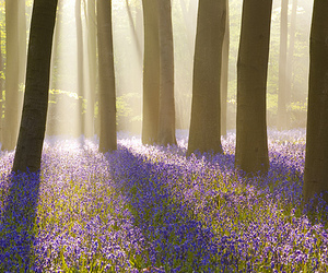 flowers, trees, and forest image