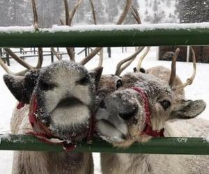 cute little reindeer