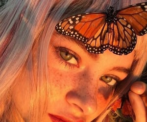 aesthetic, butterfly, and orange image