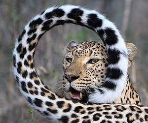 animals, beauty, and pose image