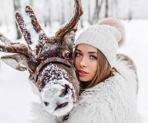 winter, animal, and christmas image