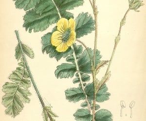 botany, periodicals, and plants, ornamental image