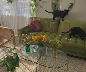 cat, green, and aesthetic image