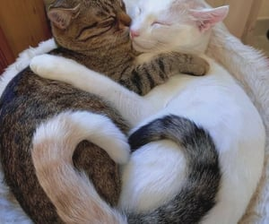 cat, animals, and love image