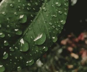 photography, lluvia, and planta image