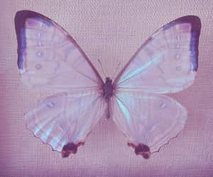 butterfly and aesthetic image