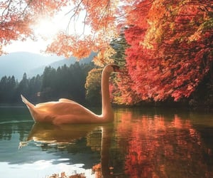 autumn, nature, and Swan image