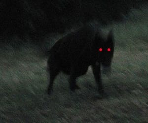 creepy, dog, and wolf image