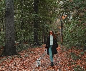 autumn, dog, and sweet image