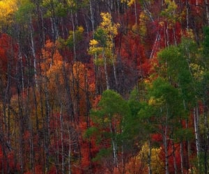 Fall colors by Eric Bennett (Bennett Film)