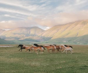 horses and mountains image