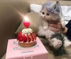 cat, birthday, and cute image