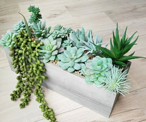 box, green, and succulent image