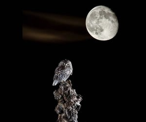 animals, moon, and full image