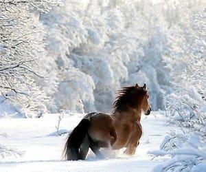 ~♡~a Winter's Tale~♡~