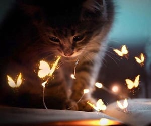 butterfly, cat, and kitten image