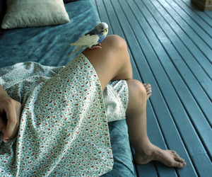 bird, dress, and vintage image
