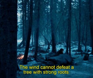 forest, trees, and the revenant image
