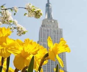beautiful places, bloom, and empire state building image