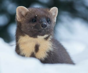 adorable, aww, and martens image