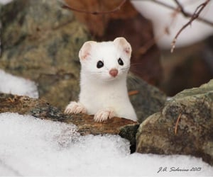 wildlife, winter, and adorable image