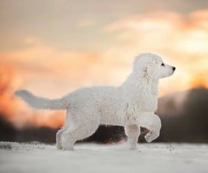 adorable, aww, and winter image