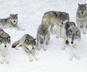 animals, snow, and magnificent image