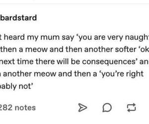 cat, funny, and meow image