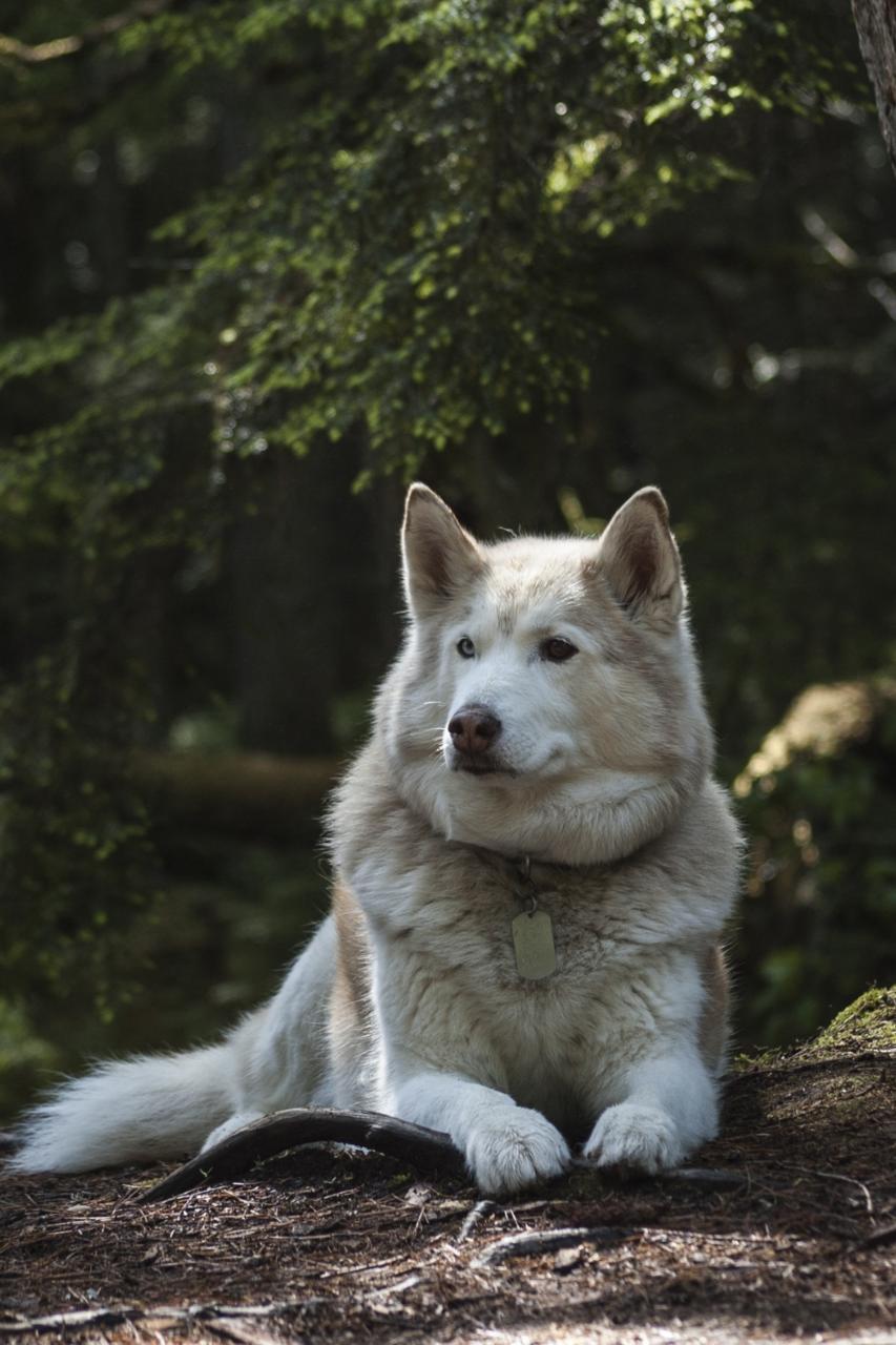 tema wolf wp, template para blog, and tema para wordpress image