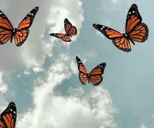 wallpaper, background, and butterfly image